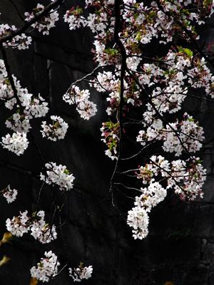 flower20100412-1.jpg