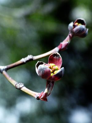 flower20100412-2.jpg